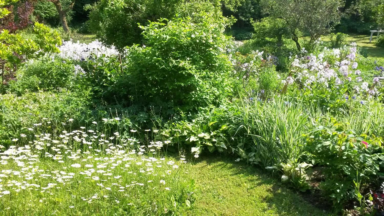 Bader Garten Pflege Blume
